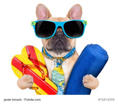 Bitte kommen Sie morgen wegen der Hitze in Badehose und Adiletten – Dresscode am Arbeitsplatz